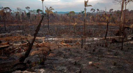 Ο Μπολσονάρου συνεχίζει την καταστροφή του Αμαζονίου: Καταργήθηκε η απαγόρευση καλλιέργειας ζαχαροκάλαμου – Έντονες αντιδράσεις