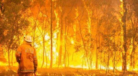 Αυστραλία: Σε κατάσταση έκτακτης ανάγκης η χώρα λόγω των πυρκαγιών – Τρεις νεκροί