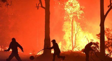 Βοήθησαν πάνω από 90.000 ζώα στη φλεγόμενη Αυστραλία