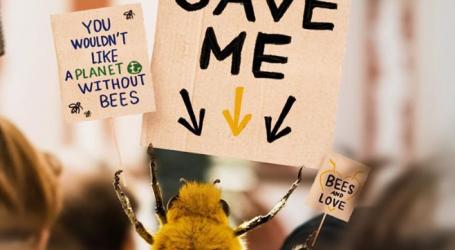 «B», ο πρώτος influencer για μέλισσες στον κόσμο