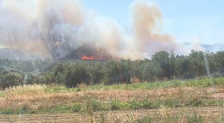 Σε εξέλιξη πυρκαγιά στον Μαραθώνα – Ενισχύονται οι πυροσβεστικές δυνάμεις