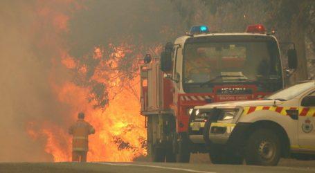 Νέα Νότια Ουαλία: Φόβοι για εκατοντάδες νεκρά κοάλα στις πυρκαγιές