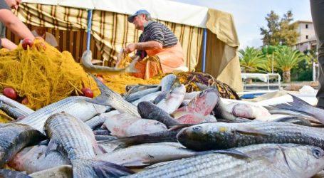 Δέσμευση 384 κιλών αλιευμάτων στο λιμάνι του Πειραιά