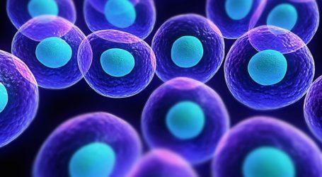Τα πρώτα έμβρυα προβάτων που περιέχουν ανθρώπινα κύτταρα, δημιούργησαν επιστήμονες στις ΗΠΑ