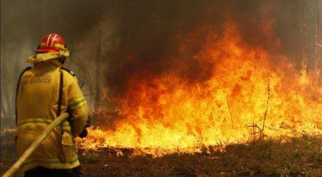 Αυστραλία: Καταστροφικές οι συνθήκες με τις πυρκαγιές στη Νέα Νότια Ουαλία