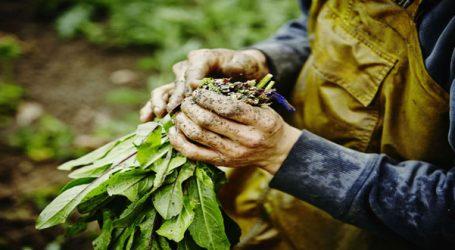 EE: Νέοι κανόνες για τη βιολογική παραγωγή