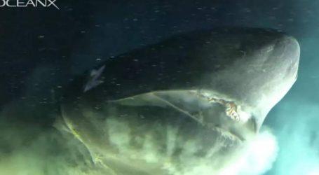 Ερευνητές κατέγραψαν σπάνιο καρχαρία 6 μέτρων (vid)