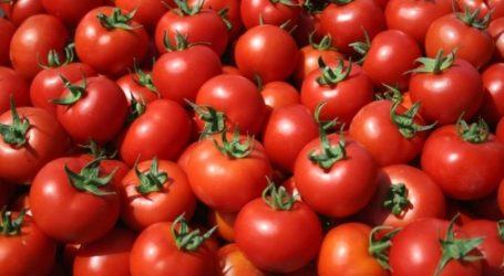 Ανακαλύφθηκε το γενετικό «συστατικό» της νοστιμιάς της ντομάτας