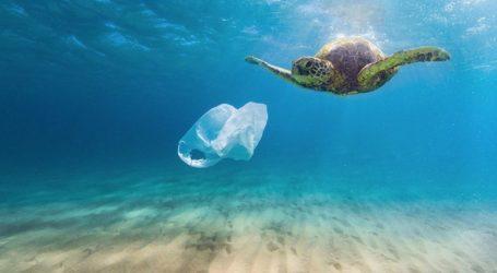 Πλαστικά στο 70% των θαλάσσιων χελωνών του «ΑΡΧΕΛΩΝ»