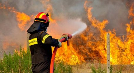 Χαλκιδική: Δασικές φωτιές από πτώσεις κεραυνών