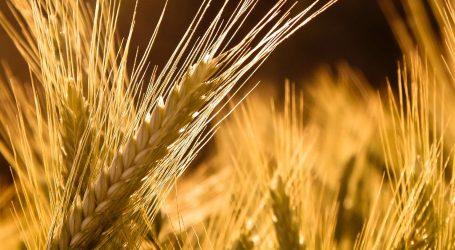 Ρωσία: Ρεκόρ 134,1 εκατομμυρίων τόνων στην σοδειά σιτηρών