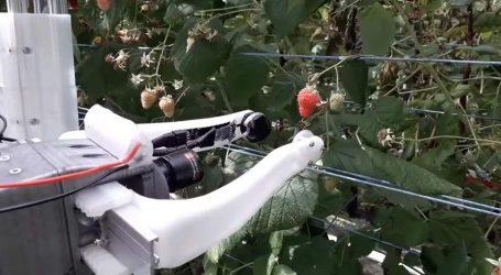 Το πρώτο στον κόσμο ρομπότ που μπορεί να μαζεύει… σμέουρα (vid)