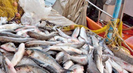Δράση για τη σωτηρία των Ελληνικών θαλασσών από την υπεραλίευση
