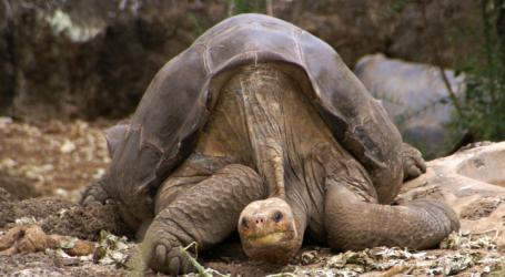 Γιγάντια χελώνα, που έζησε περίπου 1 αιώνα «αποκαλύπτει» μυστικά για τη μακροζωία