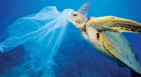 Σχεδόν οι μισές χελώνες στους ωκεανούς έχουν φάει πλαστικό με αποτέλεσμα τον θάνατό τους