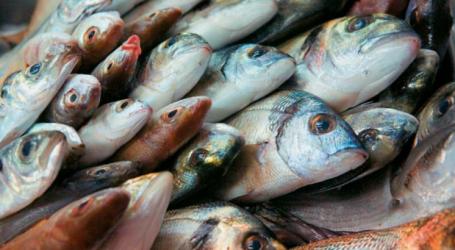 «Εισβολή» ψαριών στην Ελλάδα από την Ερυθρά Θάλασσα