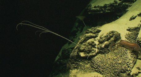 Εντυπωσιάζει και πάλι η πολυπλοκότητα της Φύσης | Η ολοκληρωμένη «απογραφή» των ιών της θάλασσας βρήκε σχεδόν 200.000 είδη, έναντι 15.000 που ήσαν γνωστά μέχρι σήμερα