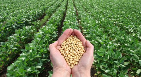 Οι ΗΠΑ κύριος προμηθευτής σπόρων σόγιας στην Ευρώπη