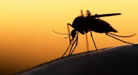 Μεταλλαγμένα κουνούπια στη Βραζιλία