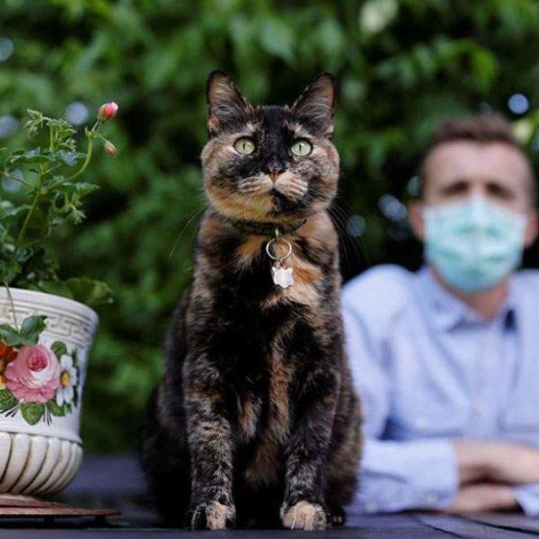 Ανέρρωσε η «Παπίλ», η πρώτη γάτα που προσβλήθηκε από κορωνοϊό