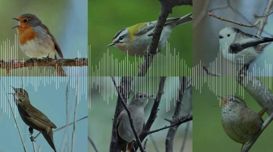 O πρώτος χάρτης του κόσμου με χορωδίες πουλιών την αυγή