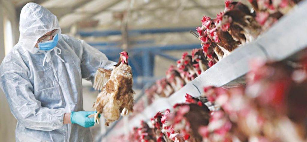 Γρίπη των πτηνών