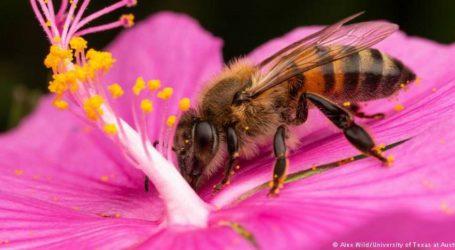 Η μέλισσα κηρύσσεται το πιο σημαντικό έμβιο είδος που ζει στον πλανήτη