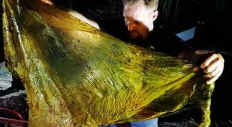 Φιλιππίνες: 40 κιλά πλάστικές σακούλες βρέθηκαν στο στομάχι φάλαινας