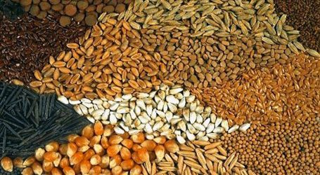 Από την Ελλάδα το 22% της παγκόσμιας παραγωγής σπόρων