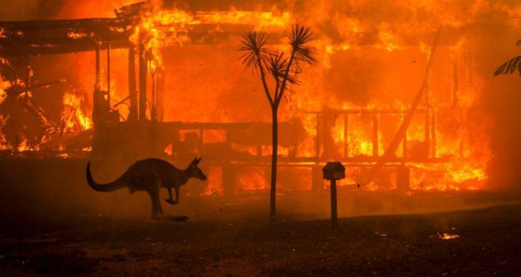 (Vid + Pics) Βιβλική καταστροφή από τις πυρκαγιές στην Αυστραλία – Ξεκλήρισμα της πανίδας