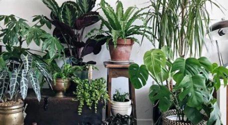 Τα φυτά ίσως δεν ανανεώνουν τον αέρα