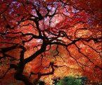 Μερικά δένδρα αλλάζουν φύλο, ενώ πεθαίνουν πιο εύκολα όταν είναι θηλυκά
