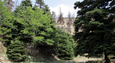 Παράταση στην ανάρτηση δασικών χαρτών