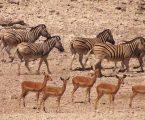 Ναμίμπια: Η κυβέρνηση πουλάει άγρια ζώα για να τα σώσει από την ξηρασία