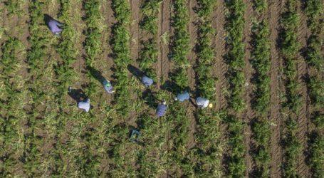 Δίχτυ προστασίας από την ΕΕ στους ευρωπαίους αγρότες, σε περίπτωση Brexit χωρίς συμφωνία