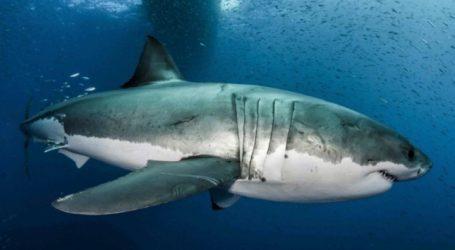 Το γονιδίωμα του μεγάλου λευκού καρχαρία κρύβει χρήσιμα μυστικά κατά του καρκίνου