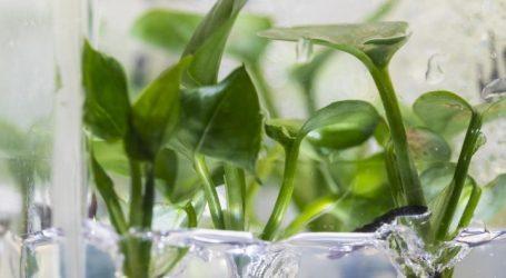 Φυτό εσωτερικού χώρου που καθαρίζει τον αέρα του δωματίου