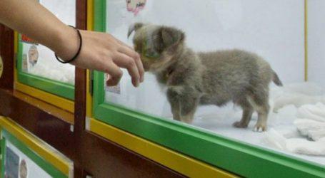 Βρετανία: Μέτρο της κυβέρνησης για απογόρευση της πώλησης σκύλων και γάτων στα pet shops
