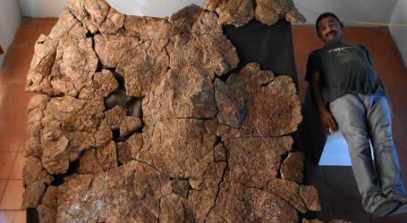 Ανακάλυψαν απολιθώματα γιγάντιας χελώνας του γλυκού νερού